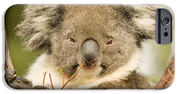 Koala iPhone Cases - Koala Snack iPhone Case by Mike  Dawson