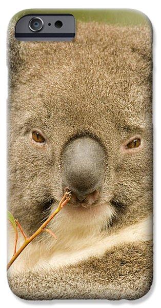 Koala Snack iPhone Case by Mike  Dawson