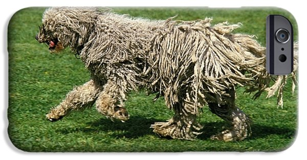 Cut-outs iPhone Cases - Komondor Dog, Running On Grass iPhone Case by Gerard Lacz