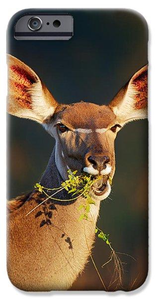 Shoulders iPhone Cases - Kudu portrait eating green leaves iPhone Case by Johan Swanepoel