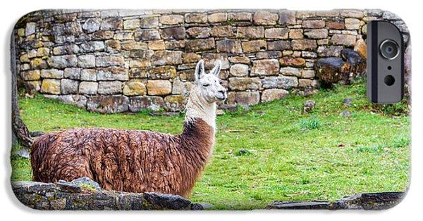 Llama iPhone Cases - Kuelap Ruins and Llama iPhone Case by Jess Kraft
