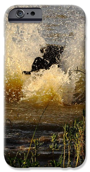 Water Retrieve iPhone Cases - Lab At Work iPhone Case by Robert Frederick