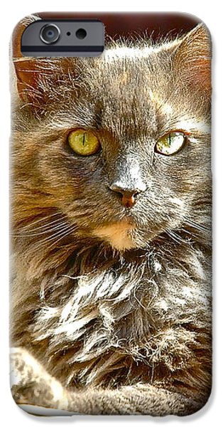 Gray Hair iPhone Cases - Lacey the Cat iPhone Case by Danielle Sigmon