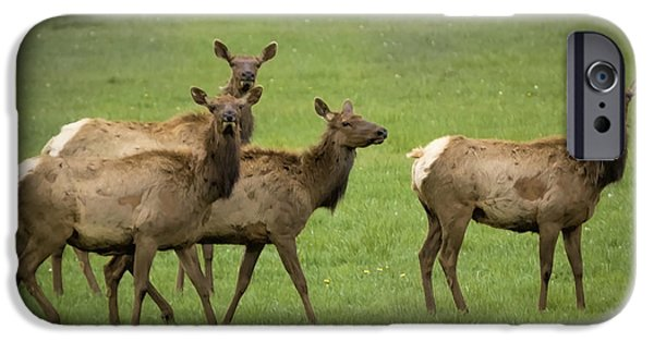 Wild Animals iPhone Cases - Ladies Day Out iPhone Case by Janice Rae Pariza