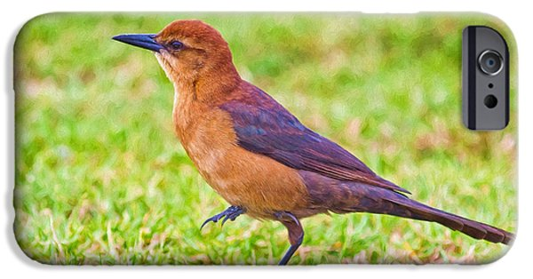 Fauna iPhone Cases - Lady Grackle 3 iPhone Case by John Bailey