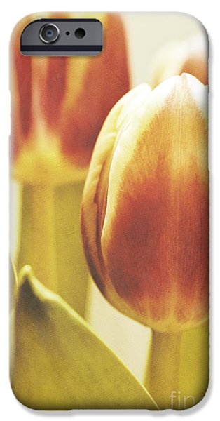 Flora Mixed Media iPhone Cases - Lady tulip iPhone Case by Angela Doelling AD DESIGN Photo and PhotoArt