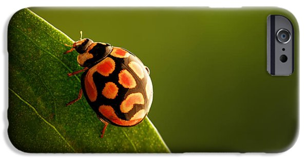 Ladybug iPhone Cases - Ladybug  on green leaf iPhone Case by Johan Swanepoel