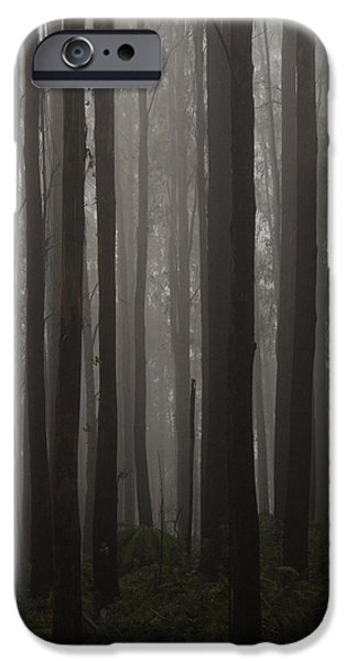 Mist iPhone Cases - Lake Mountain forest iPhone Case by Mark Ferguson