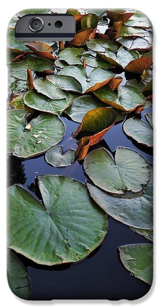 Lake Plant iPhone Case by Svetlana Sewell