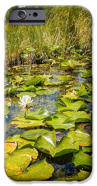 Independance Day iPhone Cases - Lake Water Lily  iPhone Case by LeeAnn McLaneGoetz McLaneGoetzStudioLLCcom