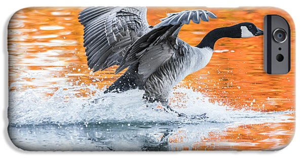 Geese iPhone Cases - Landing iPhone Case by Parker Cunningham