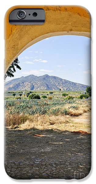 Plantation iPhone Cases - Landscape with agave cactus field in Mexico iPhone Case by Elena Elisseeva