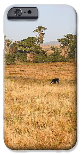 Landscape With Cows Grazing In The Field . 7D9957 iPhone Case by Wingsdomain Art and Photography
