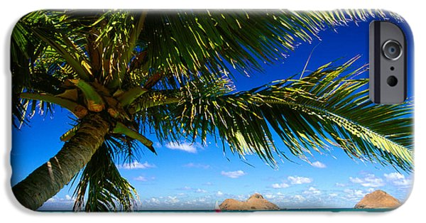 Recently Sold -  - Sailboats iPhone Cases - Lanikai, Palm Tree iPhone Case by Dana Edmunds - Printscapes