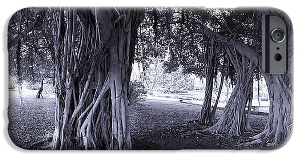 Tree Roots iPhone Cases - Large Banyan Trees in a Park iPhone Case by Yali Shi