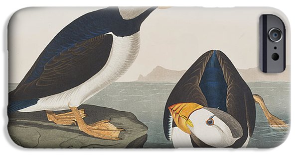 Large Drawings iPhone Cases - Large Billed Puffin iPhone Case by John James Audubon
