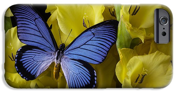 Gladioli iPhone Cases - Large Blue Winged Butterfly iPhone Case by Garry Gay