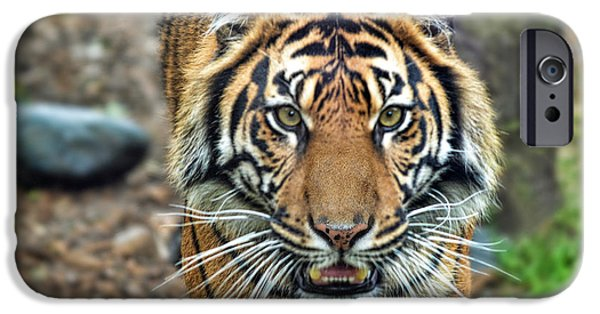 Gray Hair iPhone Cases - Large Tiger Approaching iPhone Case by Jim Fitzpatrick