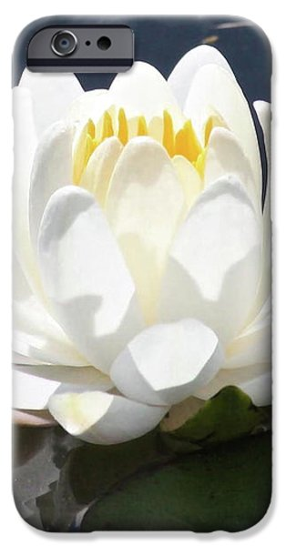 Large Water Lily with White Border iPhone Case by Carol Groenen