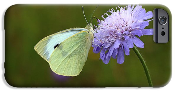 Meadow Photographs iPhone Cases - Large White Butterfly Beauty iPhone Case by Rumyana Whitcher