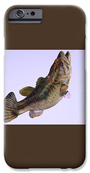 Largemouth Bass Side Profile iPhone Case by Corey Ford