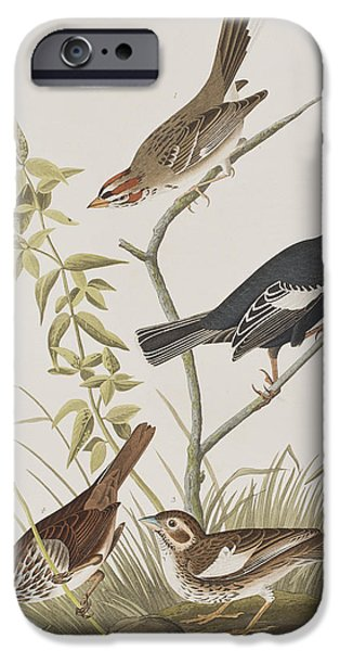Finch iPhone Cases - Lark Finch Prairie Finch Brown Song Sparrow iPhone Case by John James Audubon