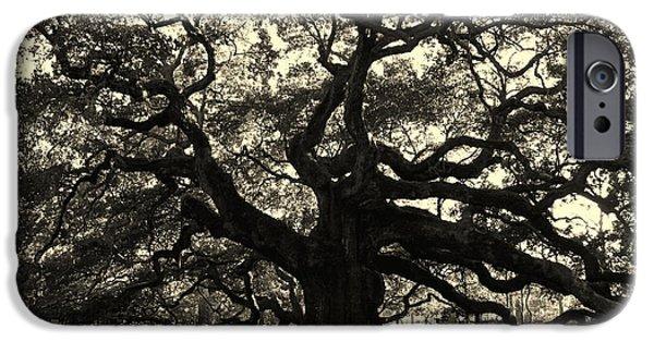 Old Trees iPhone Cases - Last Angel Oak 72 iPhone Case by Susanne Van Hulst