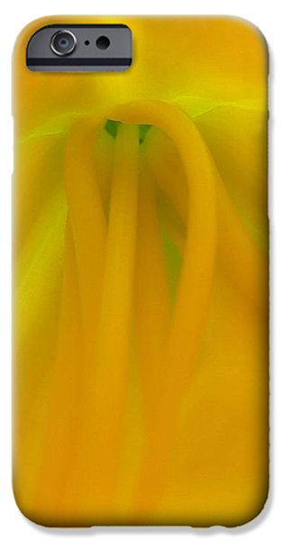Day Lilies iPhone Cases - Last Light iPhone Case by Juergen Roth