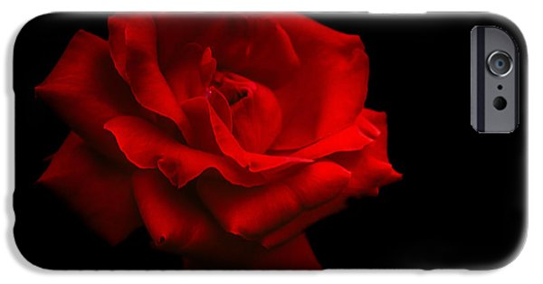 One iPhone Cases - Last Rose of Summer iPhone Case by Jenny Rainbow