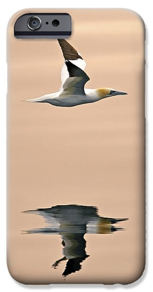Boobies iPhone Cases - Late Arrival iPhone Case by Tony Beck