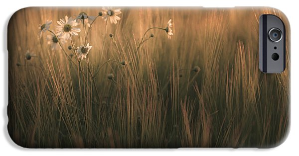 Meadow Photographs iPhone Cases - Late summer bloom iPhone Case by Chris Fletcher