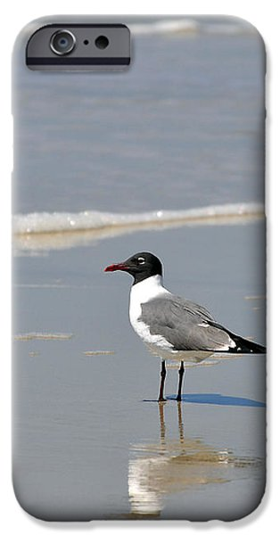 Laughing Gull Reflecting iPhone Case by Al Powell Photography USA