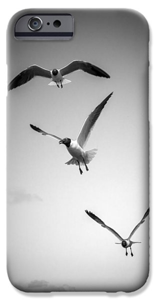 Flying Seagull iPhone Cases - Laughing Gulls iPhone Case by Alexey Stiop