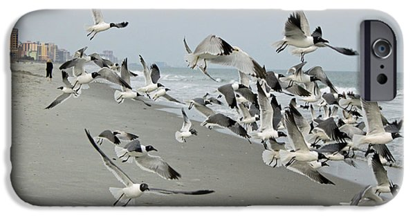 Flying Seagull iPhone Cases - Laughing Gulls II iPhone Case by Suzanne Gaff