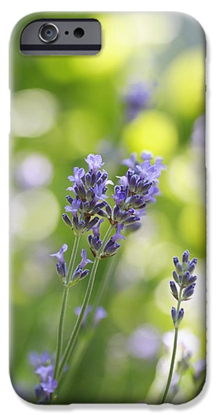 Lavender Garden iPhone Case by Frank Tschakert