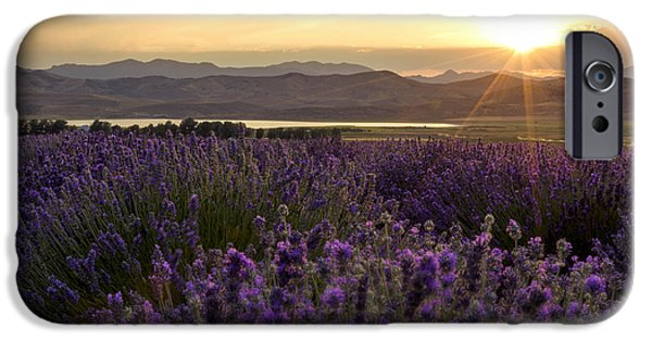 Lavender iPhone Cases - Lavender Glow iPhone Case by Chad Dutson