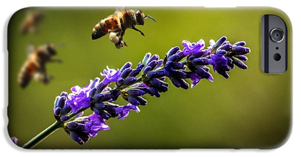 Bee iPhone Cases - Lavender iPhone Case by Martin Newman