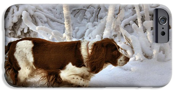 Springer Spaniel iPhone Cases - Leading the Way iPhone Case by Kristin Elmquist