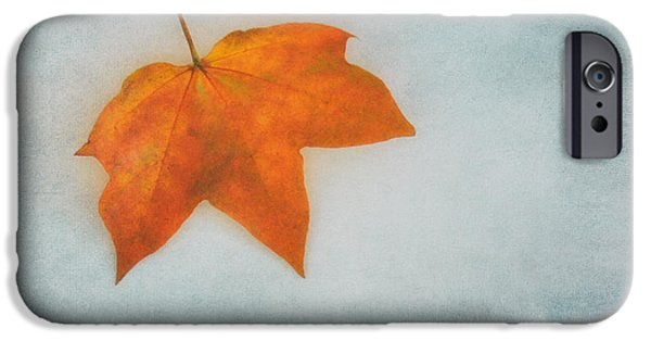Leave iPhone Cases - Leaf 3 iPhone Case by SK Pfphotography
