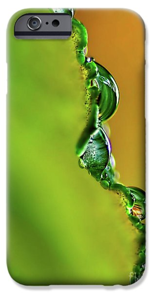 Leaf Profile and Water Droplets iPhone Case by Kaye Menner