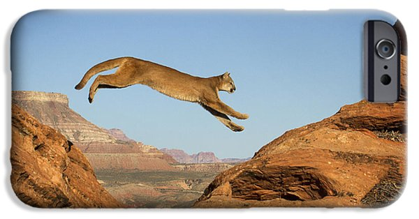 Red Rock iPhone Cases - Leaping Mountain Lion iPhone Case by Dixie Henrie