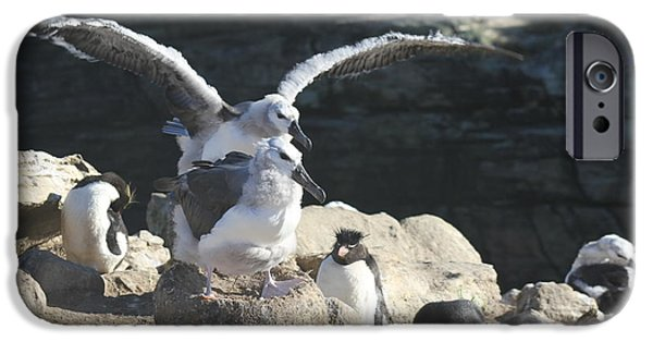 Baby Bird iPhone Cases - Learning to fly iPhone Case by Ellis Morley Photography