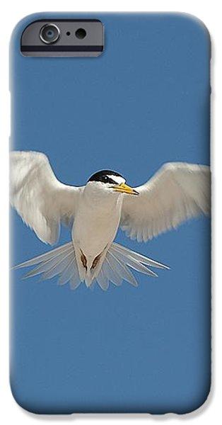 Least Tern 2 iPhone Case by Kenneth Albin