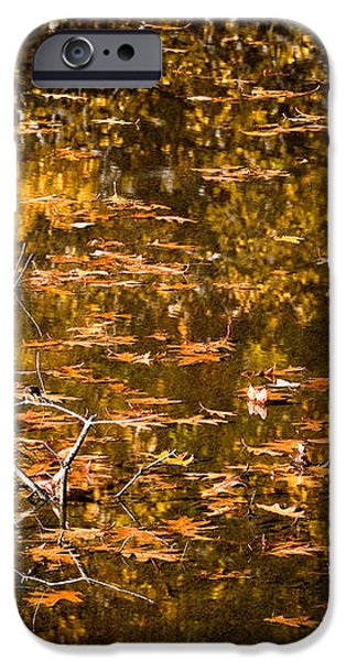 Leaves and Reflections iPhone Case by Susan Cole Kelly