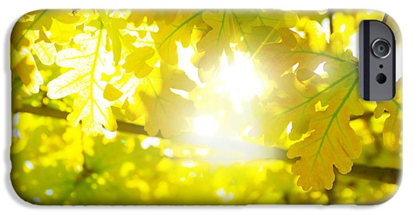 Fall iPhone Cases - Leaves Backlight iPhone Case by Carlos Caetano