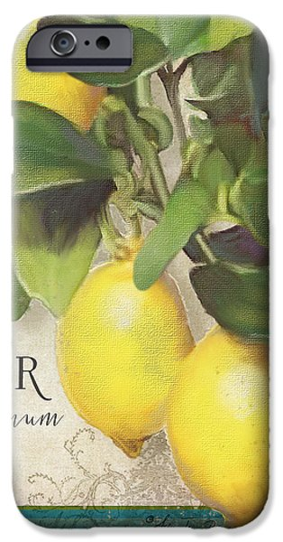 Lemon iPhone Cases - Lemon Tree - Citronier Citrus Limonum iPhone Case by Audrey Jeanne Roberts