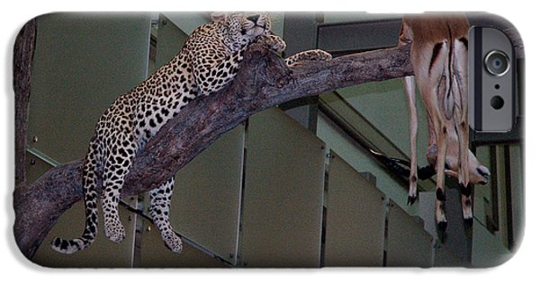 National Museum Of America History iPhone Cases - Leopard Tree Cat Preying iPhone Case by LeeAnn McLaneGoetz McLaneGoetzStudioLLCcom