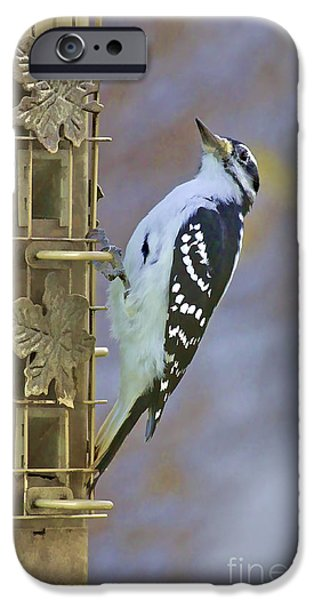 Hairy Woodpecker iPhone Cases - Let Me Pose For You iPhone Case by Deborah Benoit