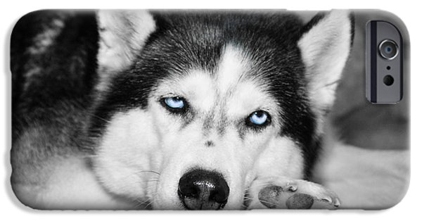 Huskies iPhone Cases - Let Me Sleep Please iPhone Case by Jennifer White