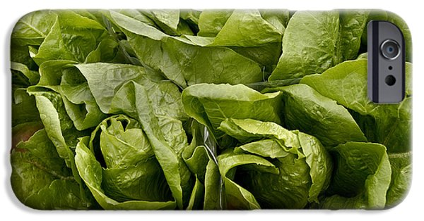 Farm Stand iPhone Cases - Lettuce iPhone Case by Phil Cardamone